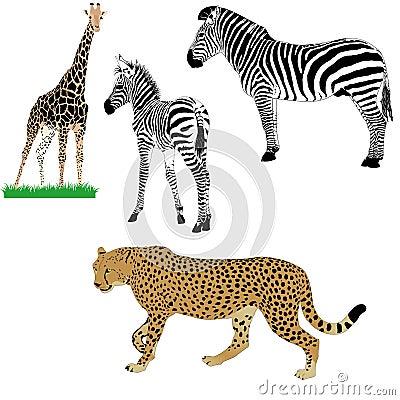被设置的非洲动物