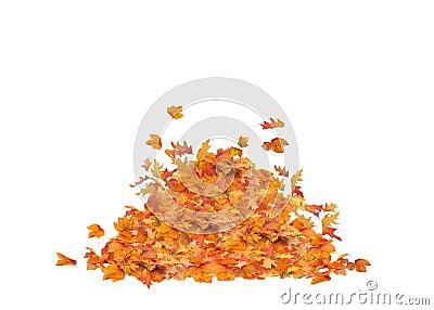 被隔绝的叶子堆