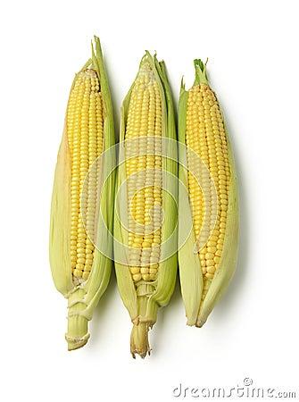 库存照片: 被隔绝的玉米穗图片