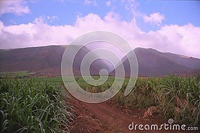 西方毛伊的山
