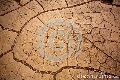 豆科灌木沙丘在死亡谷烘干了黏土细节