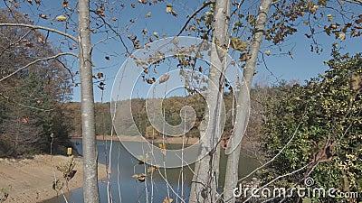 质朴的木质背景中的枫叶 秋与十一月 股票视频