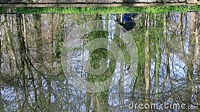 赶走一辆自行车的一个人的反射在湖 影视素材