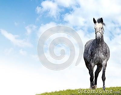 起斑纹的灰色马