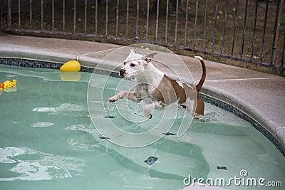 女人和狗配动态囹�a_洗狗水池 图片合集