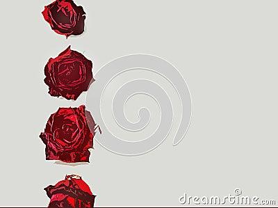 边界信函爱玫瑰色