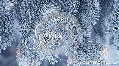 递写白色圣诞快乐动画书法字法文本在snowly冷杉木分支背景录影的 影视素材