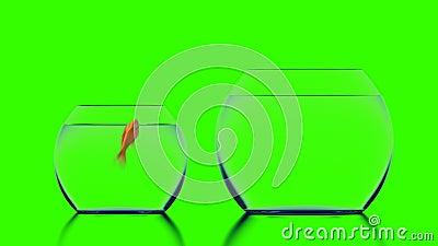 金鱼跳进大水族馆,绿色背景下的美丽3d动画 影视素材