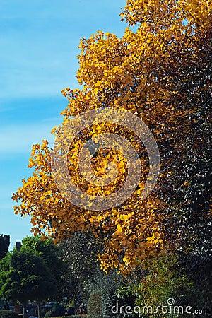 金黄的秋天
