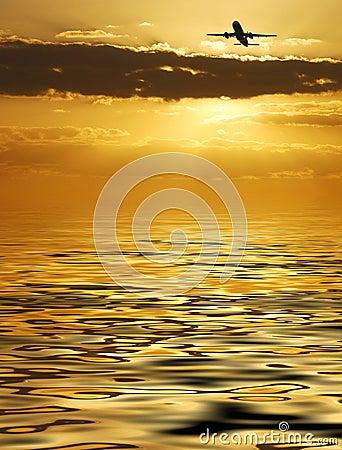金黄的飞行