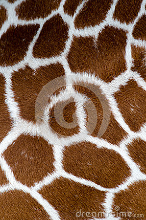 长颈鹿模式