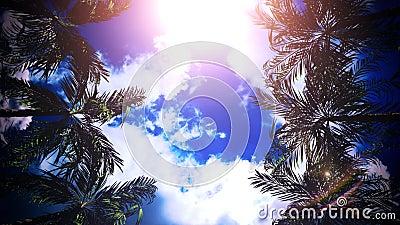 阳光天空VJ环背景下的棕榈大道 股票录像