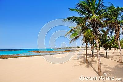 阿雷西费兰萨罗特岛Playa Reducto海滩棕榈树