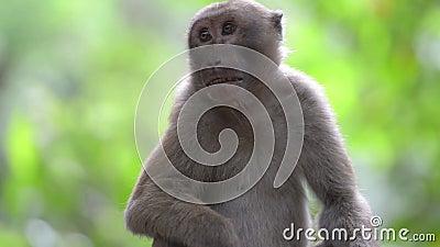 雄性可爱的野猴坐在树上 影视素材