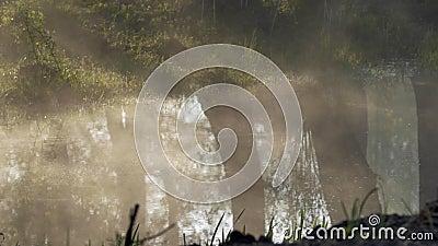 雾沿水爬行 结构树的反映 股票录像