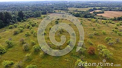 飞行在领域和森林,鸟瞰图 股票录像