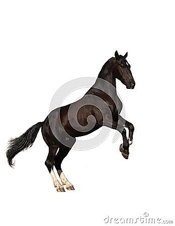 饲养小跑步马的查出的掠夺