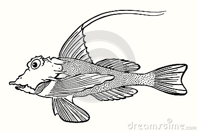抽象鱼,手拉的传染媒介例证.图片