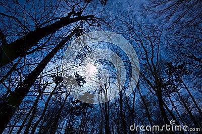 黑暗的森林图片