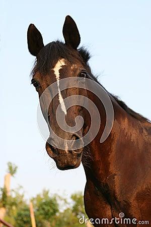 黑色小跑步马