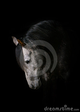 背景囹�a�i)�aj9e+��_背景黑色马.