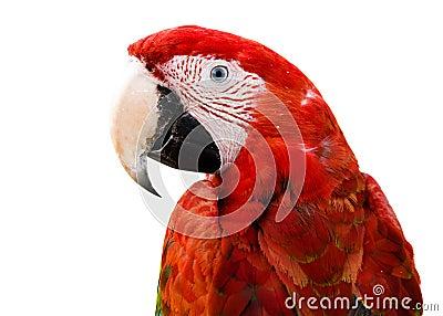 动物眼睛是红色的