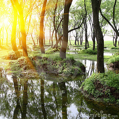 δάση λευκών