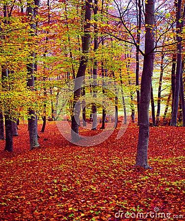 δάσος πτώσης χρωμάτων