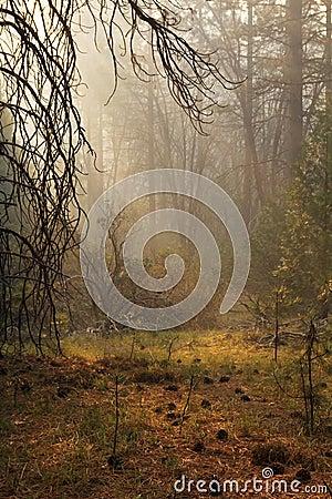 Δάσος της Misty
