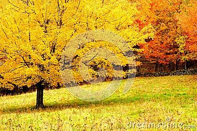 Κρατικά δέντρα βιρτζίνια πάρκων