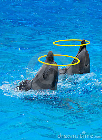 δελφίνια που παίζουν τα &delt