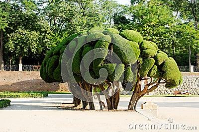 διακοσμητικό δέντρο