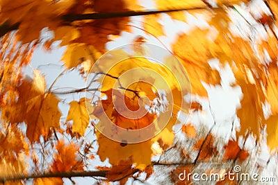 движение листва