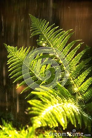 Дождь лета