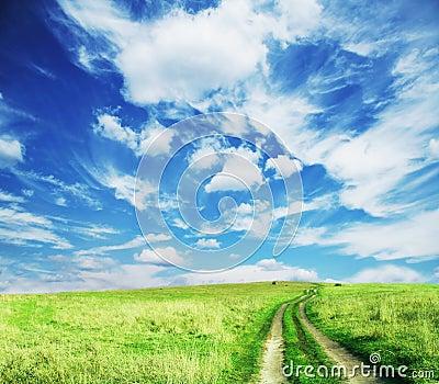 дорога поля