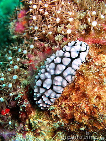 水下的动物区系
