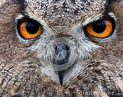贯穿的猫头鹰眼睛