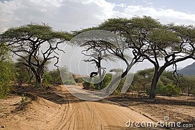 005 Afryce krajobrazu