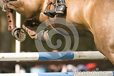012 skaczący koni.