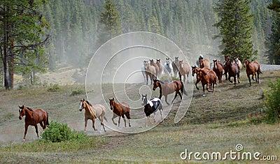 1匹推进马