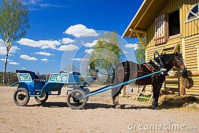 1匹轻驾车赛用马