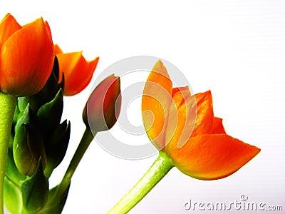 1橙色的开花