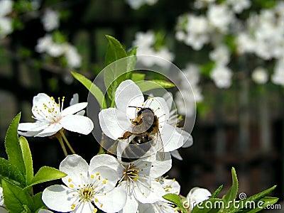 1 пчела
