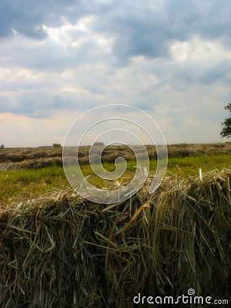 1 сено поля