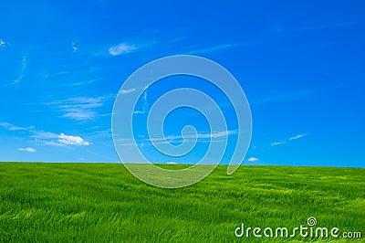 1 зеленый цвет поля