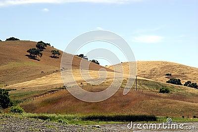 1 Kalifornien kullar