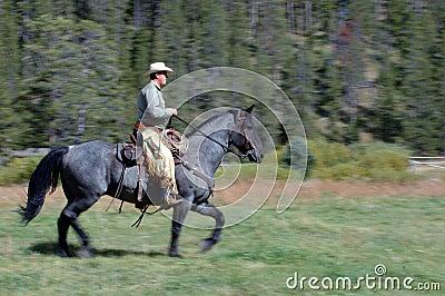 1 riding лошади ковбоя