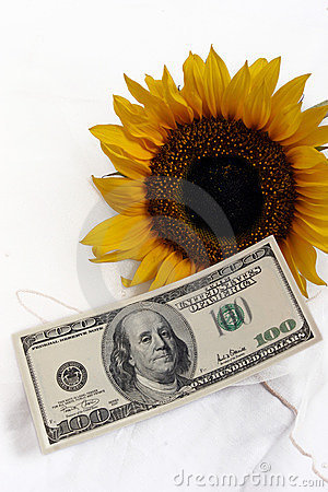 Free $100 Bill And A Yellow Sunflower Stock Image - 589501