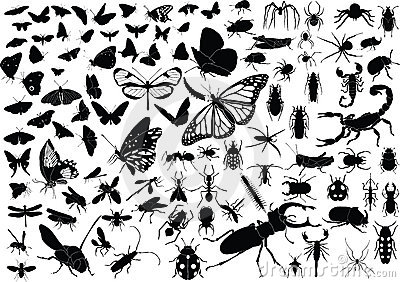 100 insects