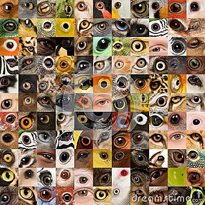 Free 121 Animal And Human Eyes Royalty Free Stock Images - 5394659